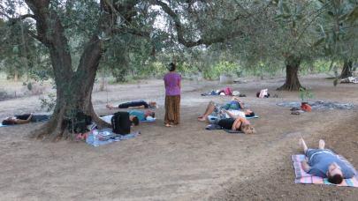 Meditazione guidata in un Oliveto - Lecce